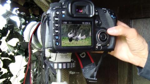 Fotografía y observa las aves del Geoparque
