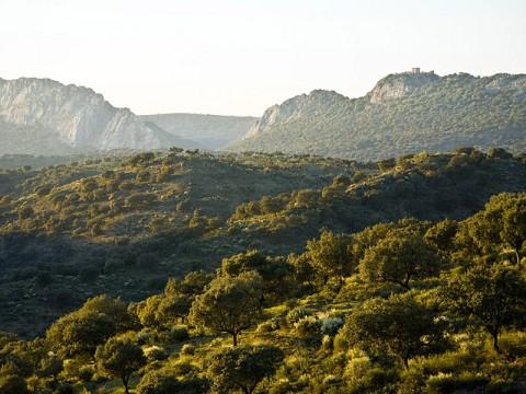 Parque Nacional de Monfragüe, una aproximación a las aves