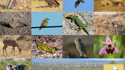 Iberian Nature – Servicio de Guías de Naturaleza
