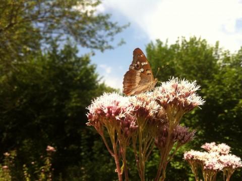 La Flora y la fauna de los Parques Naturales