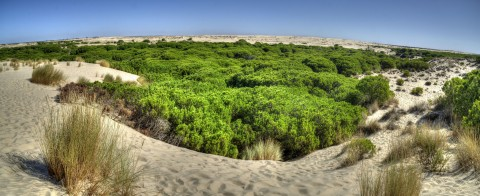 Doñana, un lugar único para disfrutar haciendo ecoturismo