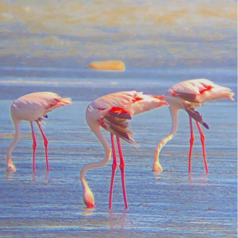 Safari EcoCultural en Delta del Ebro