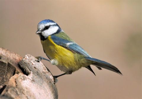 Iníciate en la Ornitología en Huesca