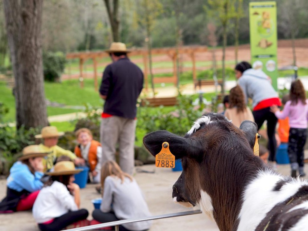 Vaca y niños - Corriol