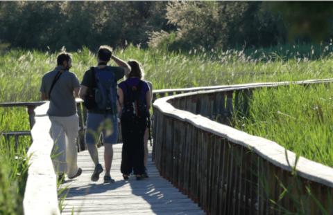 De Daimiel a las Tablas por la laguna de Navaseca