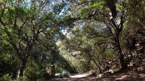 Conecta con la naturaleza de Menorca con los sentidos
