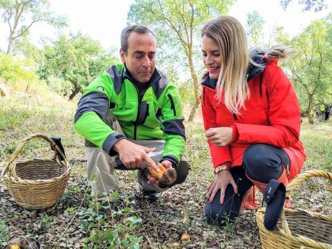 Experiencia micológica en el Parque Natural Sierra de Aracena y Picos de Aroche