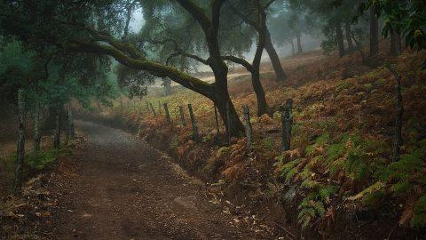 Árboles centenarios en el Parque Natural Sierra de Aracena y Picos de Aroche
