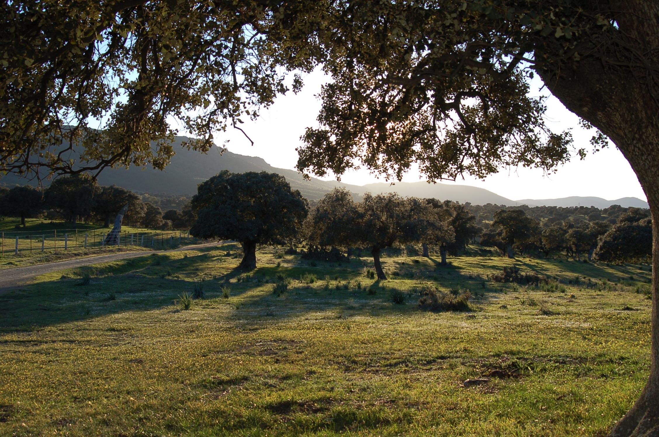 Encinar Valle de Alcudia