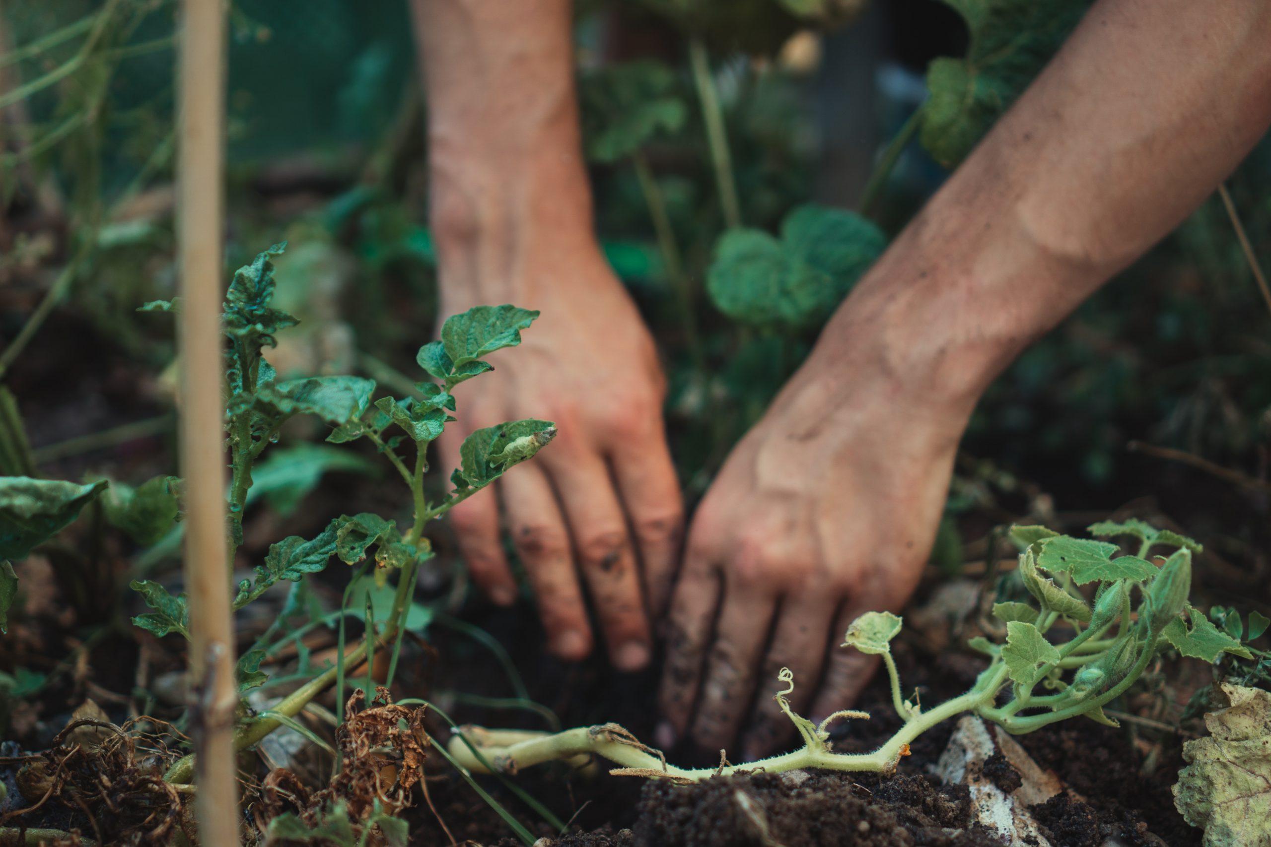 Las 4 experiencias definitivas que practicar en defensa de la educación ambiental