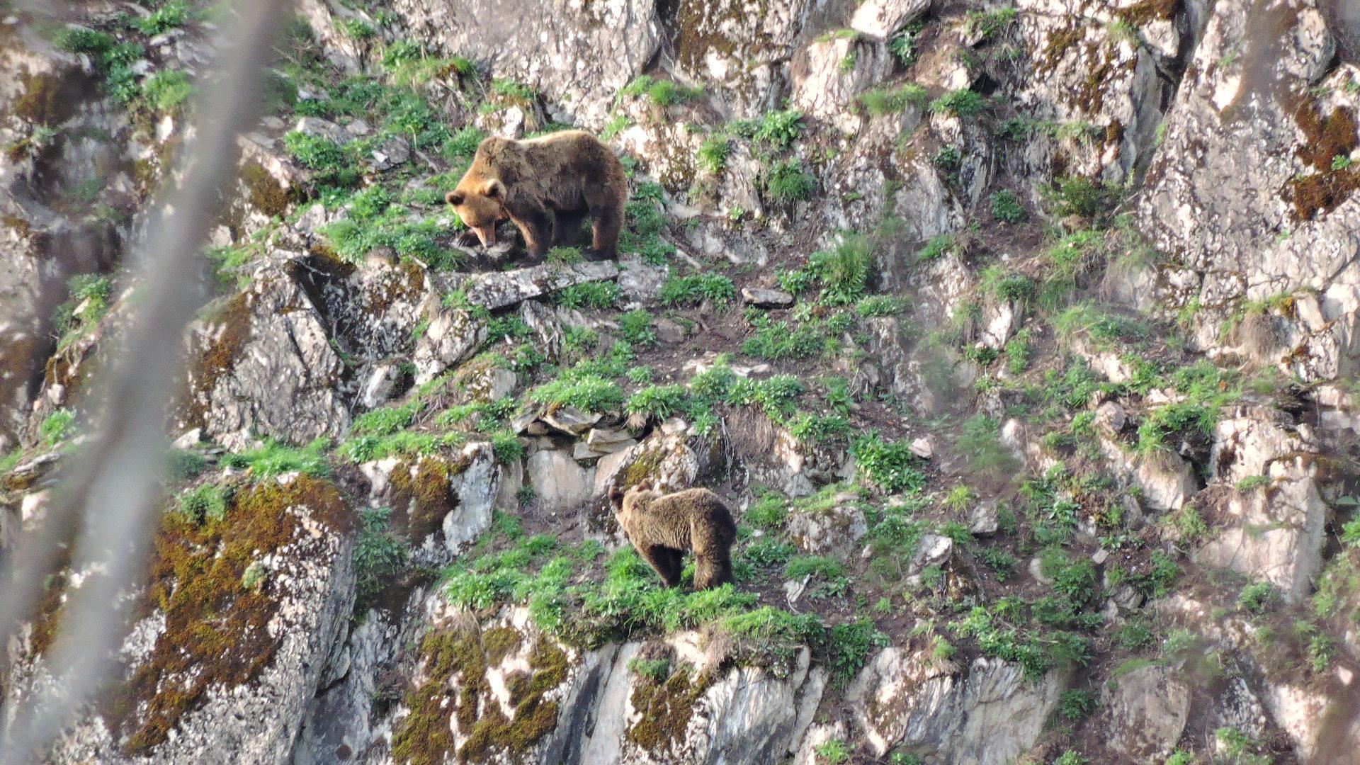 El día europeo de los parques naturales con el club ecoturismo en España y esta selección de parques entre los que se encuentra el De Fuentes del Narcea