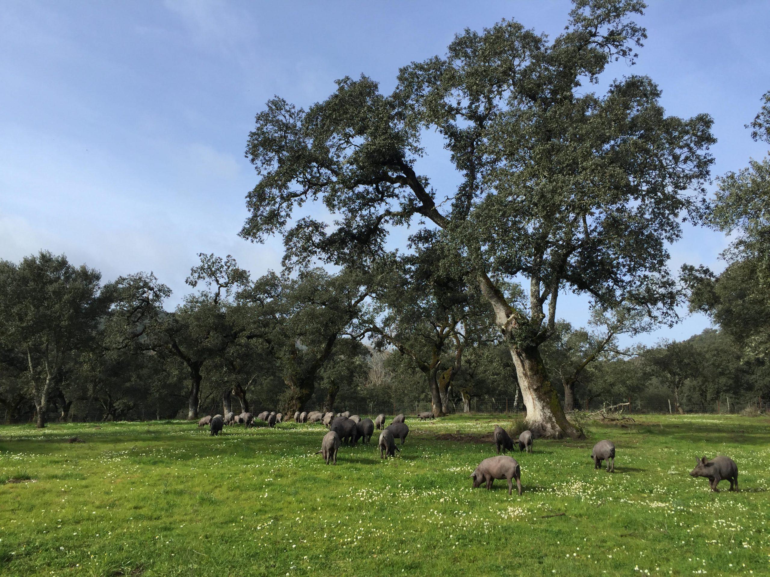 El día europeo de los parques naturales con el club ecoturismo en España y esta selección de parques entre los que se encuentra el de Sierra de Aracena y Picos de Aroche