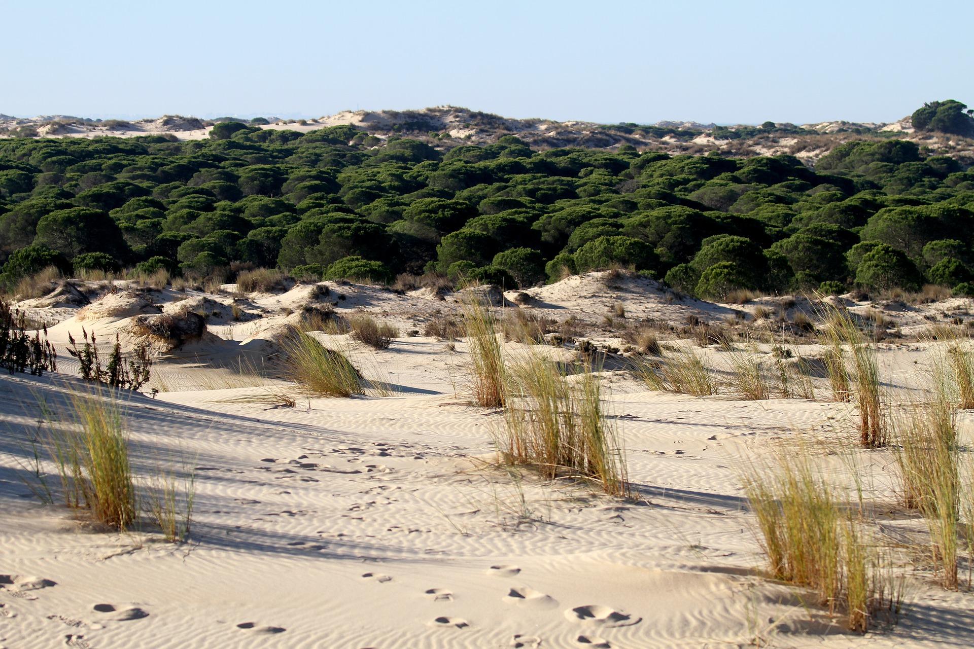 El día europeo de los parques naturales con el club ecoturismo en España y esta selección de parques entre los que se encuentra el de Doñana