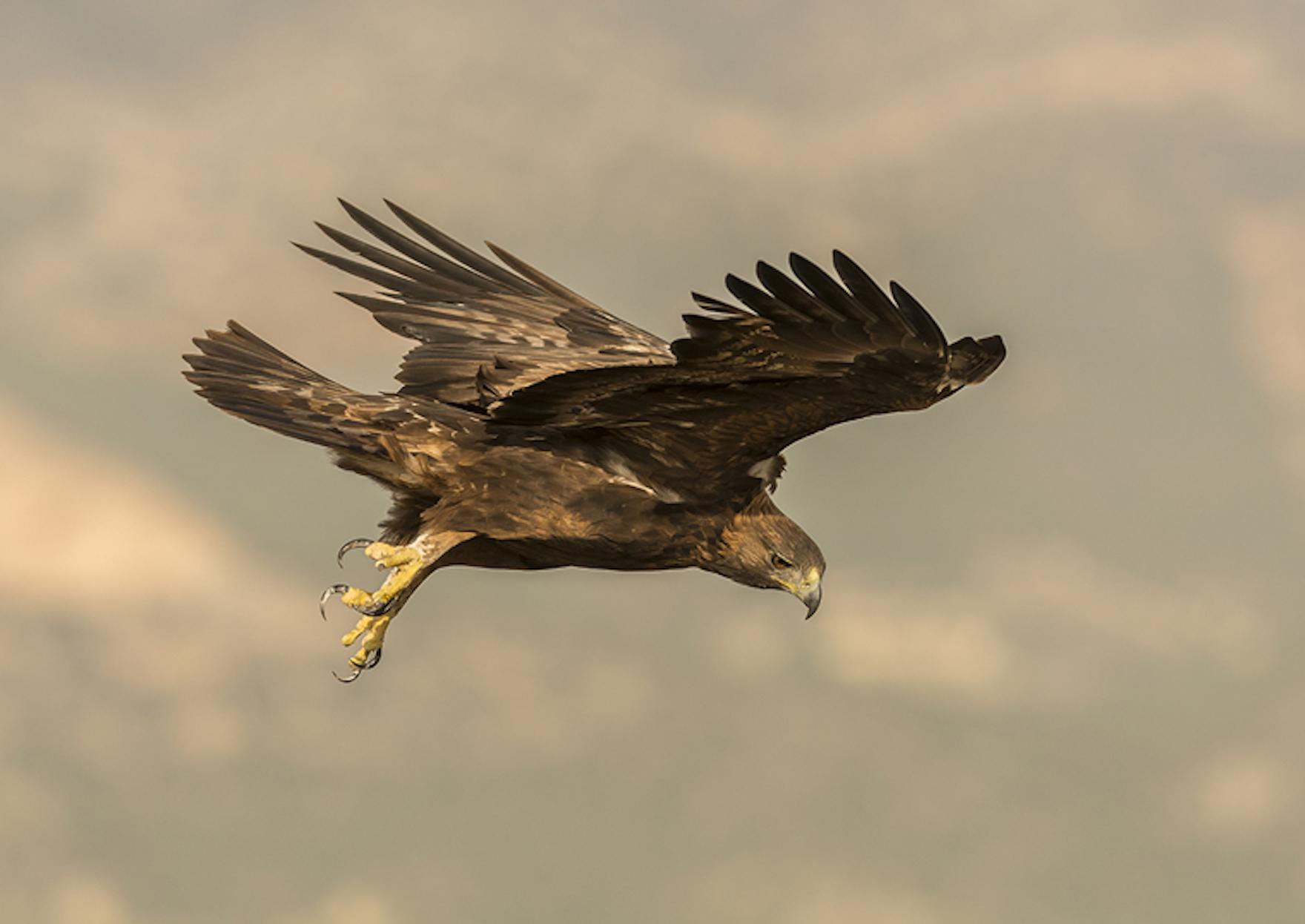 Experiencias birdwatching ecoturismo Sierra espuna