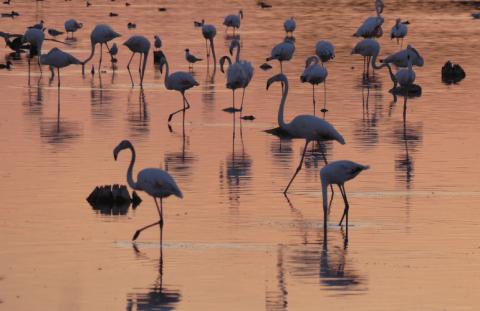 Descubre las aves de Las Tablas de Daimiel y el río Guadiana con Caminos del Guadiana